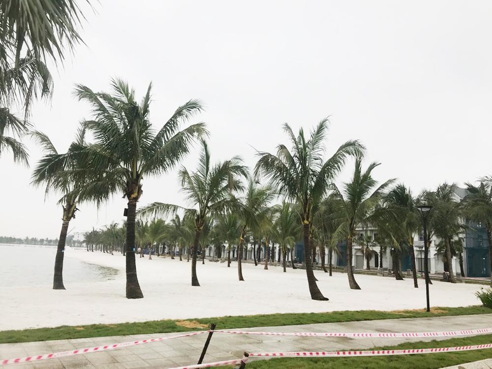 Bãi cát ven hồ trung tâm trông giống bờ biển tự nhiên với hàng dừa. Cát trắng được chủ đầu tư chở về từ Nha Trang, sàng nhiều lần trước khi đem trải ven hồ.