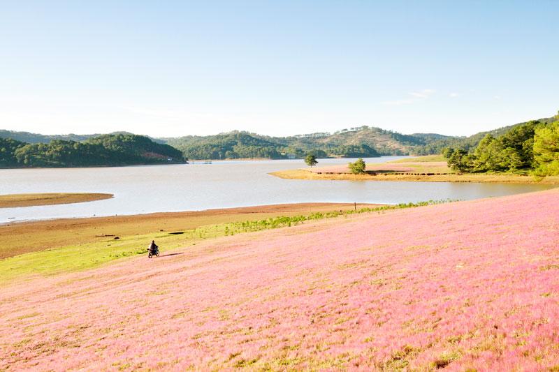 Cỏ hồng, thông xanh và hồ nước trong vắt là linh hồn của KDLQG Đan Kia - Suối Vàng. Ảnh: Võ Trang