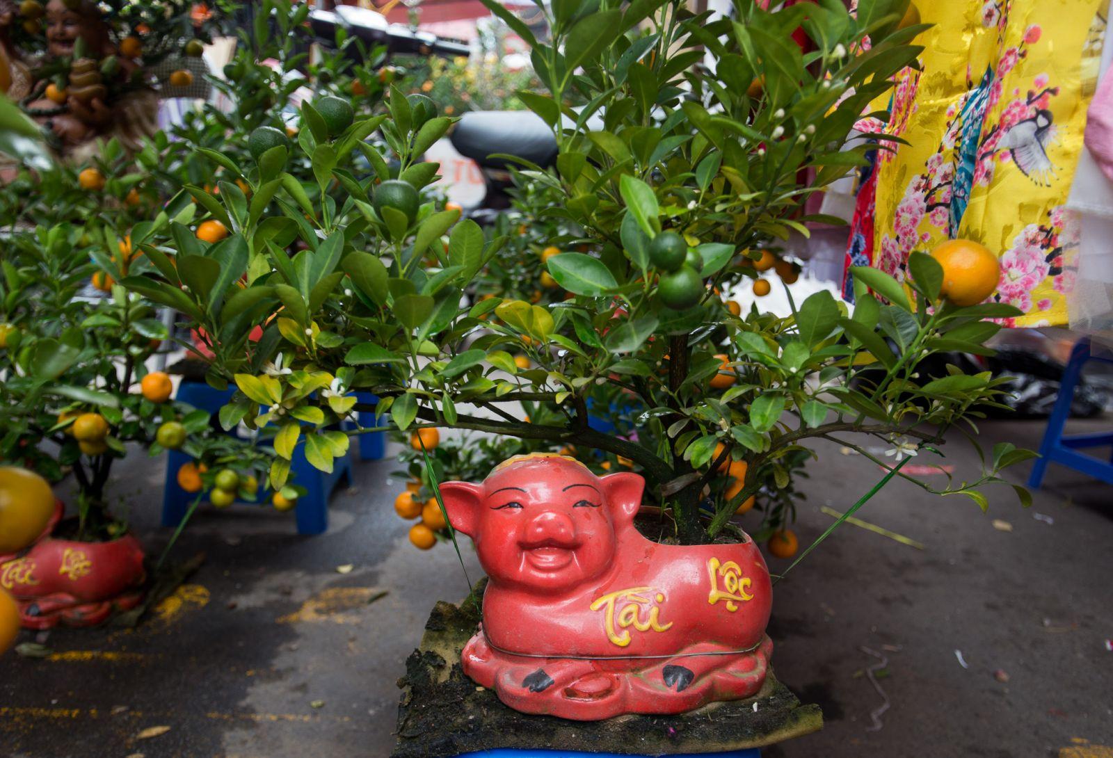 Tết 2019 là Tết Kỷ Hợi nên biểu tượng hình chú heo lên ngôi. Quất bonsai trồng trong heo đất với chữ Tài Lộc mang tới may mắn, sung túc dịp năm mới.