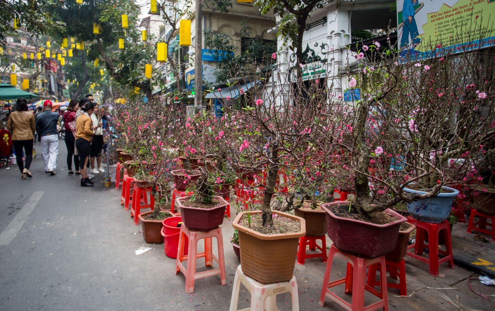 Nhiều năm nay, chợ hoa Hàng Lược chỉ tập trung bán các loại đào quất có độ lớn vừa phải theo nhu cầu của người mua. Rất nhiều người dân đi chợ hoa không chỉ để mua hoa mà còn để tìm lại hương vị Tết Nguyên đán đặc biệt ở phố cổ Hà Nội.