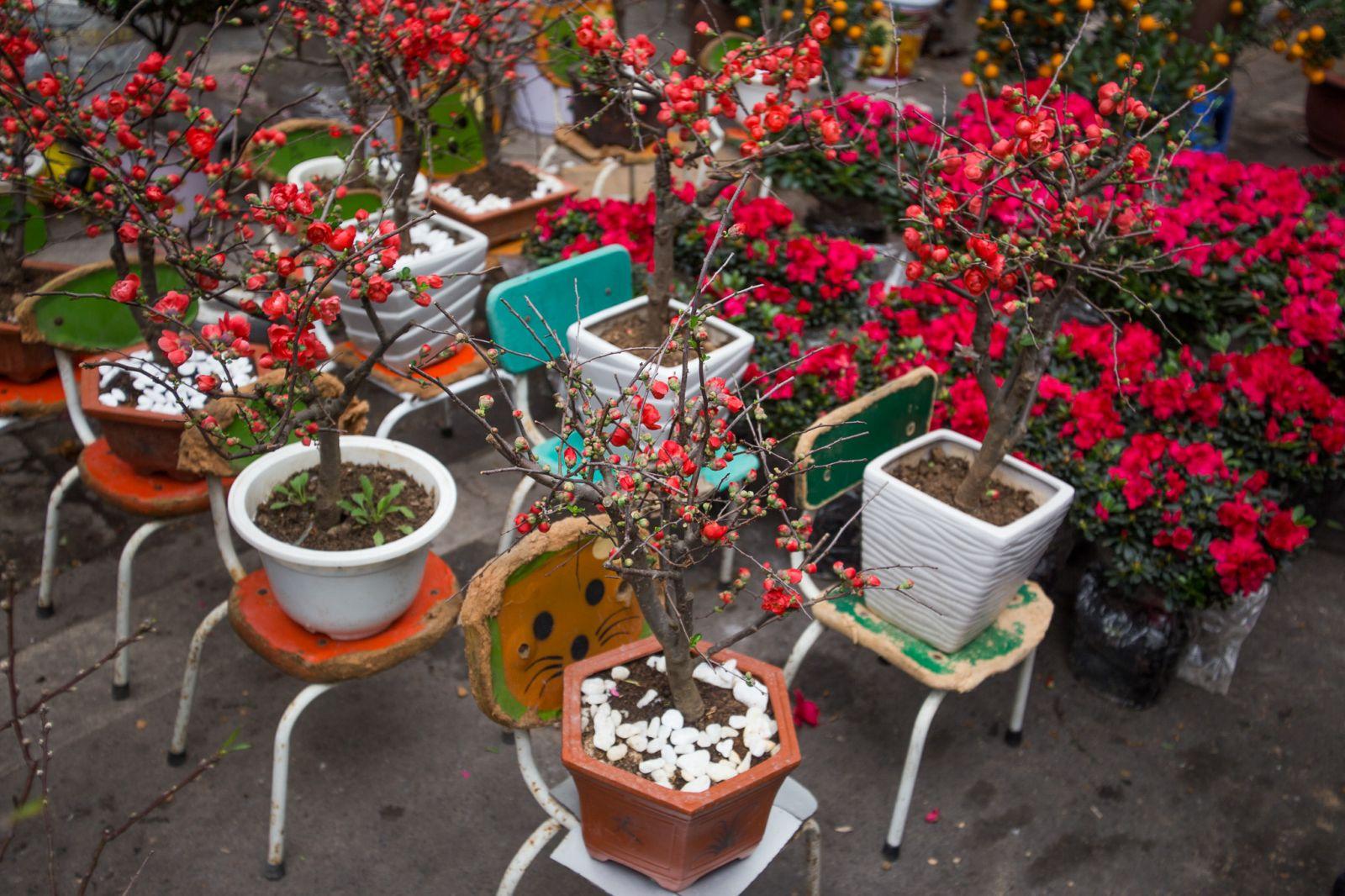 Tại chợ hoa Hàng Lược ngoài hoa đào thì còn rất nhiều loại hoa khác với nhiều chủng loại phong phú.
