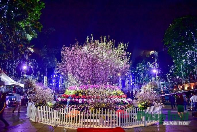 Bên cạnh hoa anh đào, các loài hoa đặc trưng của Việt Nam cũng sẽ xuất hiện tại lễ hội tạo nên bức tranh đa sắc màu.