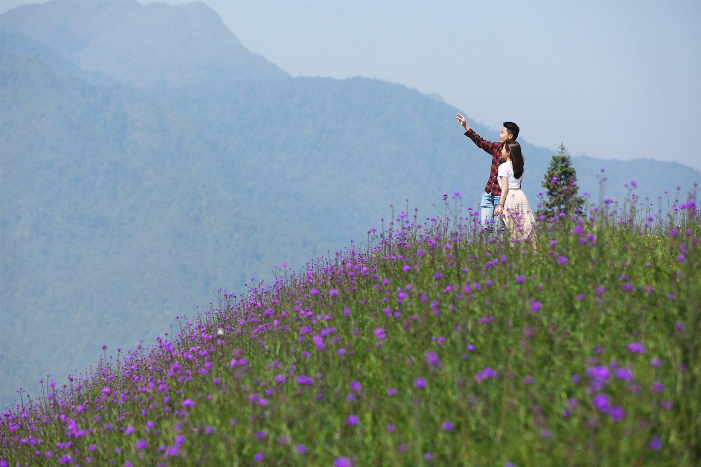 Nằm giữa lưng chừng núi, lưng chừng mây, đồi hoa rộng 15.000 m2 như thể một quầng mây tím thơm dịu, bềnh bồng chốn bồng lai tiên cảnh.