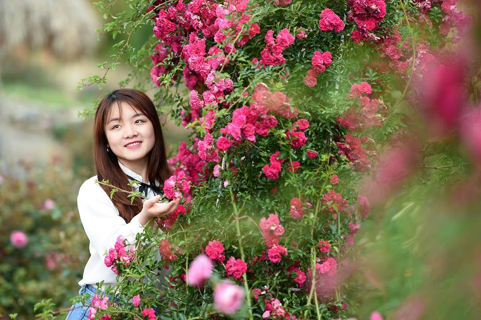 Để rồi hè sang, hồng cổ Sa Pa, hồng Vân khôi cùng các loại hồng nhập ngoại, hồng leo đồng loạt khoe sắc, như thể có một phép màu vừa chạm tới Fansipan, biến Sun World Fansipan Legend thành một khu vườn cổ tích.