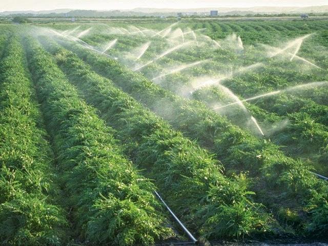 GFS tiên phong phát triển nông nghiệp hữu cơ đặc sắc trên nền tảng công nghệ hiện đại
