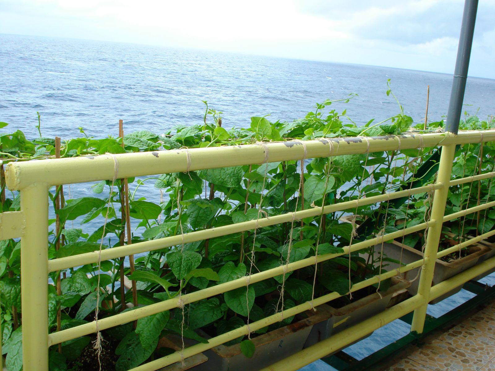 Những mầm xanh trên sóng nhà giàn