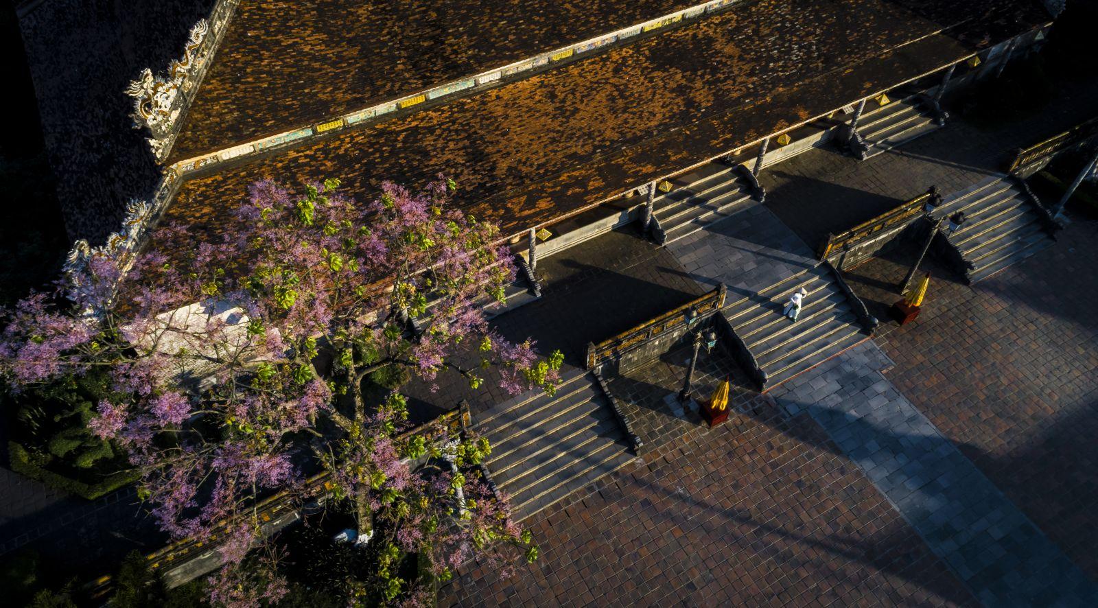 Mùa hoa Ngô Đồng gắn liền với di tích huế.
