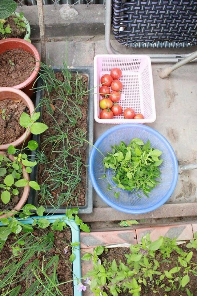 Hành, cà chua đều có cả