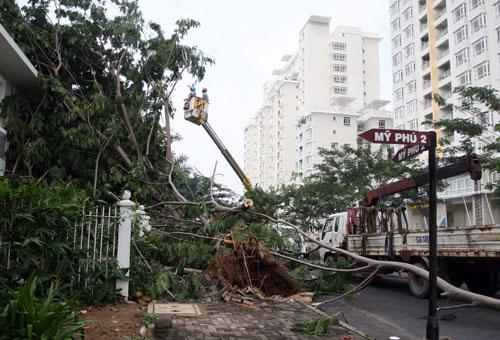 Năm 2013, sau một trận mưa kèm giông lốc, hàng loạt cây tại Khu đô thị Phú Mỹ Hưng đã gãy đổ, bật gốc