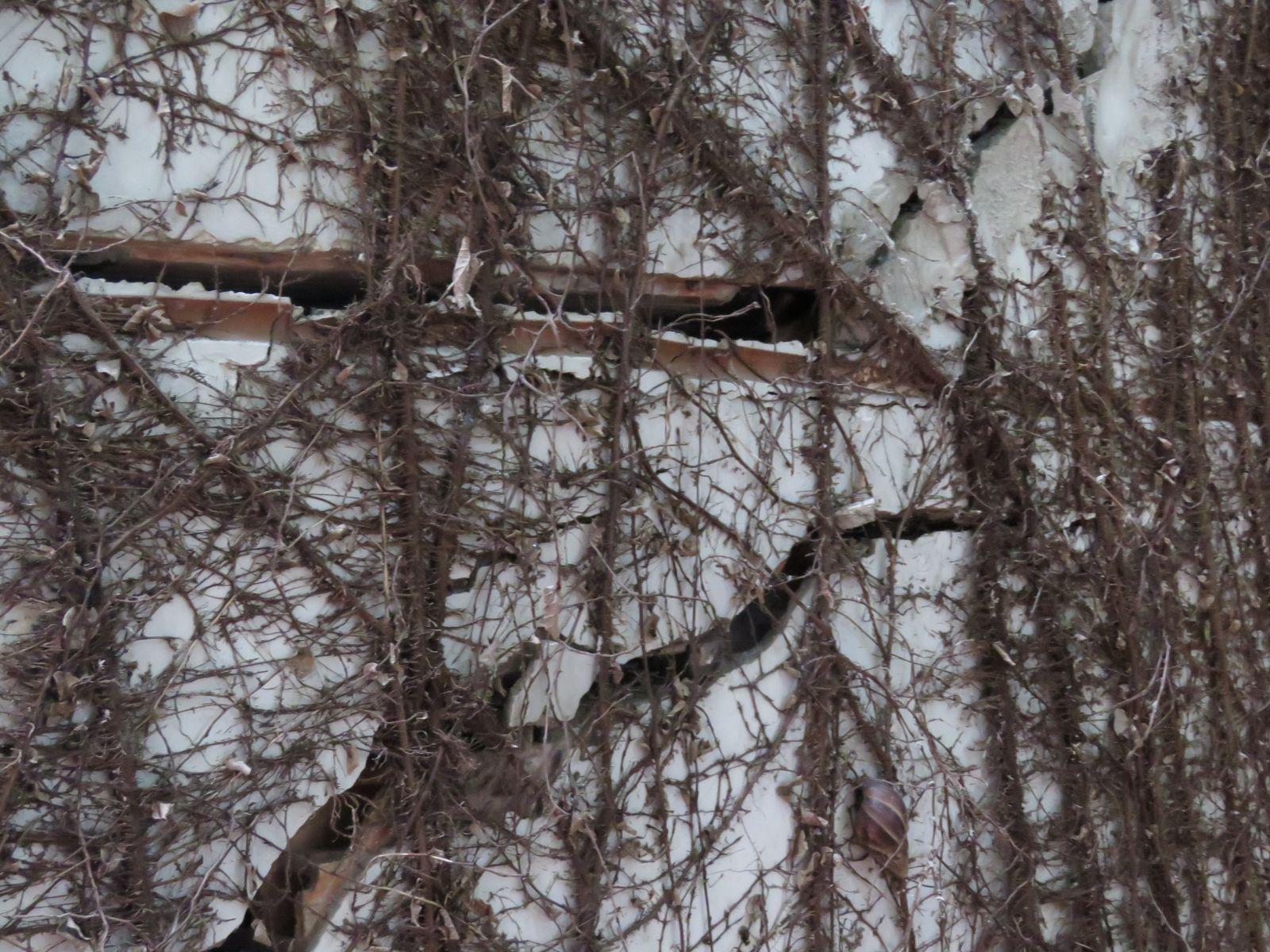 Tường ban công trước khu nhà, cây xanh chết do không còn chỗ bám.