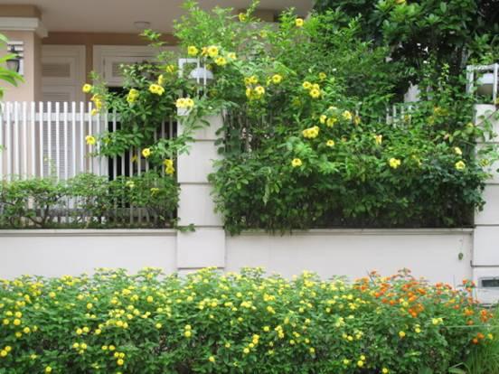 Cây xanh che chắn trước cửa sẽ giúp ngăn tử khí vào nhà