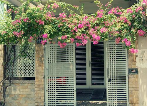 Điều kiện đất đai chật hép không thể trồng hàng cây vẫn có thể tạo sự che chắn cho ngôi nhà bằng cách trồng giàn hoa giấy leo trên cổng
