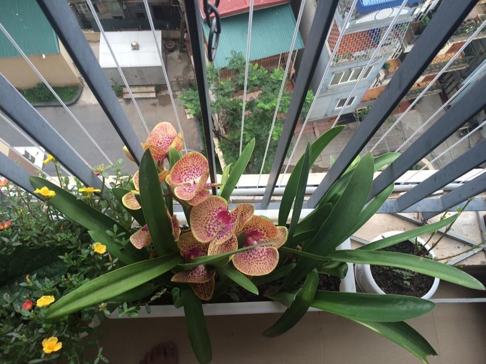 Một khóm hoa nở vào ban sáng như liều thuốc tình thần vô giá.