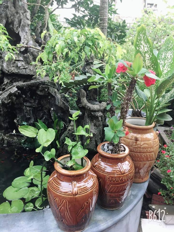 Khu vườn nhỏ và triết lý Xanh của bố