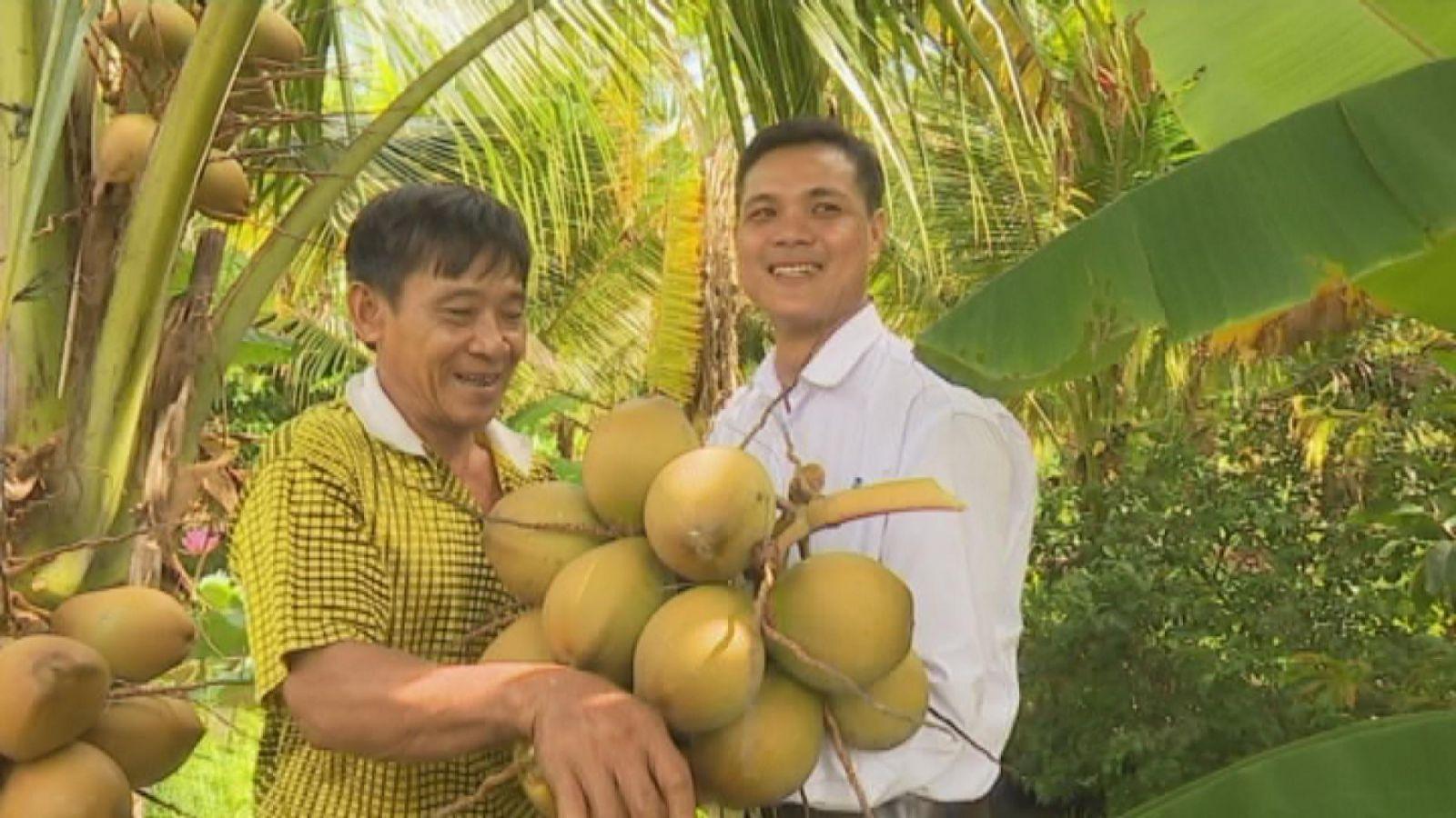 Chủ homestay Sáu Lế hái dừa phục vụ du khách