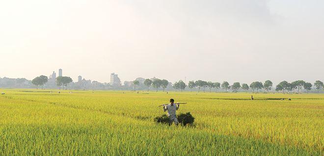 Người nông dân vẫn đang tự loay hoay trên chính mảnh ruộng của mình.