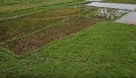 Vĩnh Phúc: Tiềm năng phát triển bất động sản nông nghiệp nhìn từ những thửa ruộng hoang