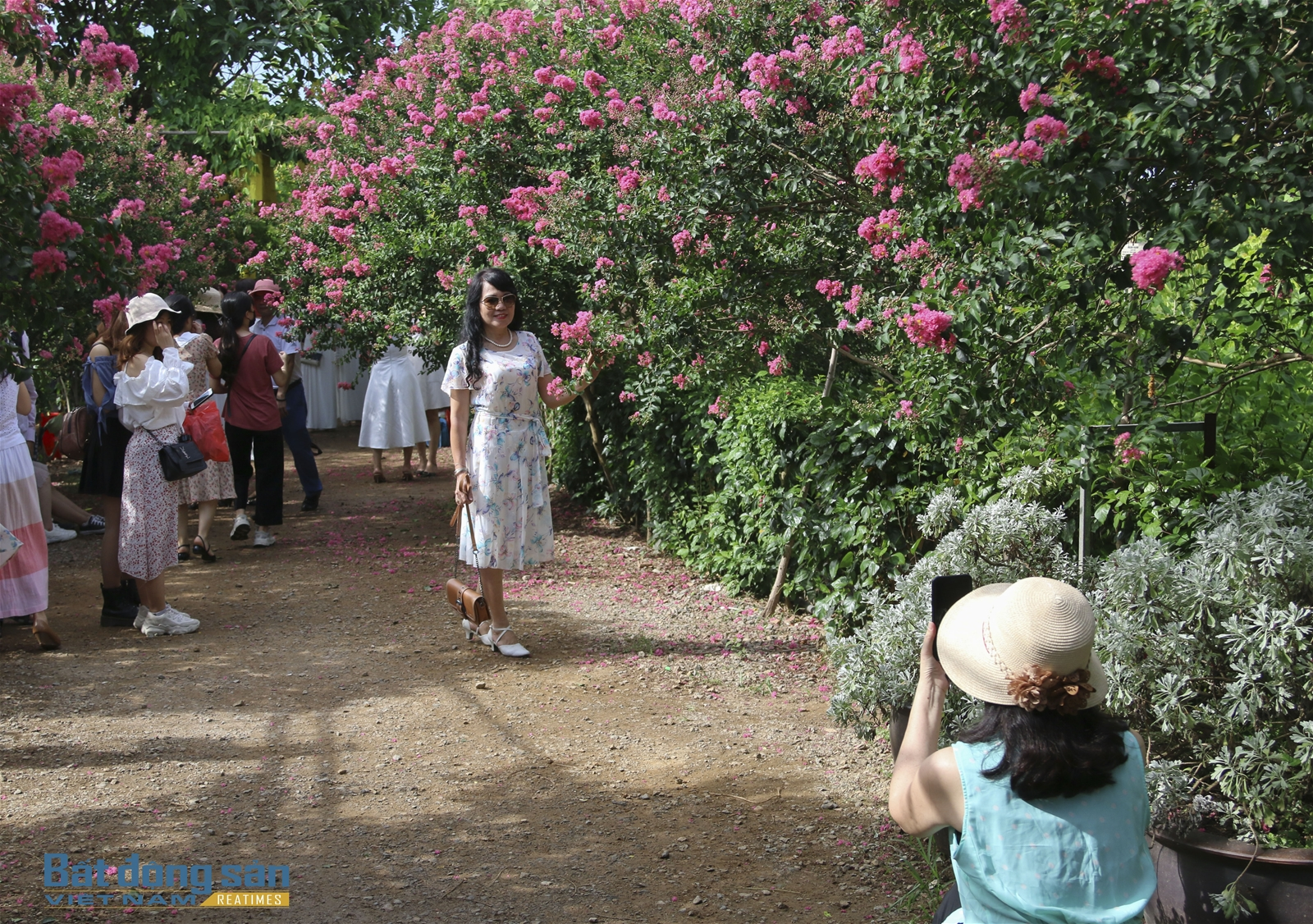 Thả hồn vào con đường hoa Tường Vy đẹp như mơ ở Hà Nội - 7