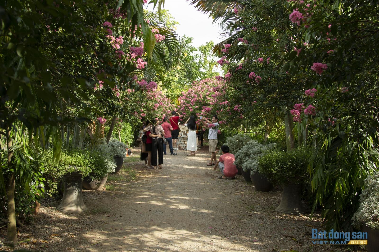 Thả hồn vào con đường hoa Tường Vy đẹp như mơ ở Hà Nội - 8