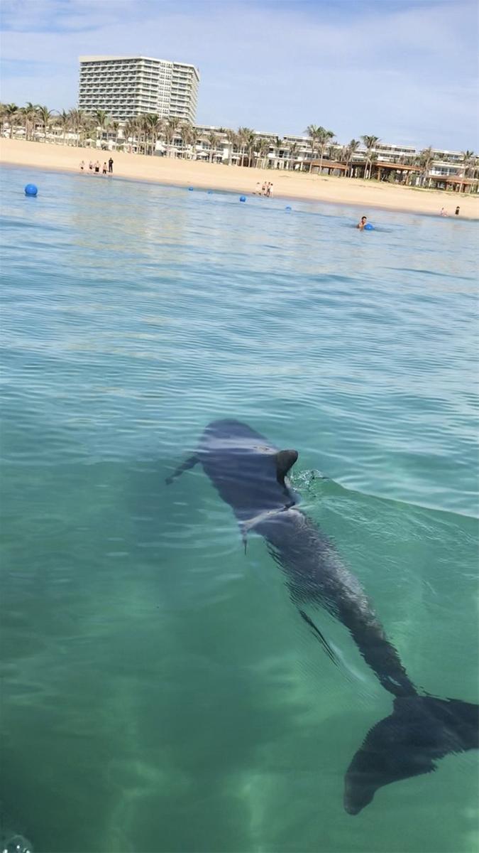 Cá heo ghé thăm biển Cam Ranh: Điềm lành sau đại dịch
