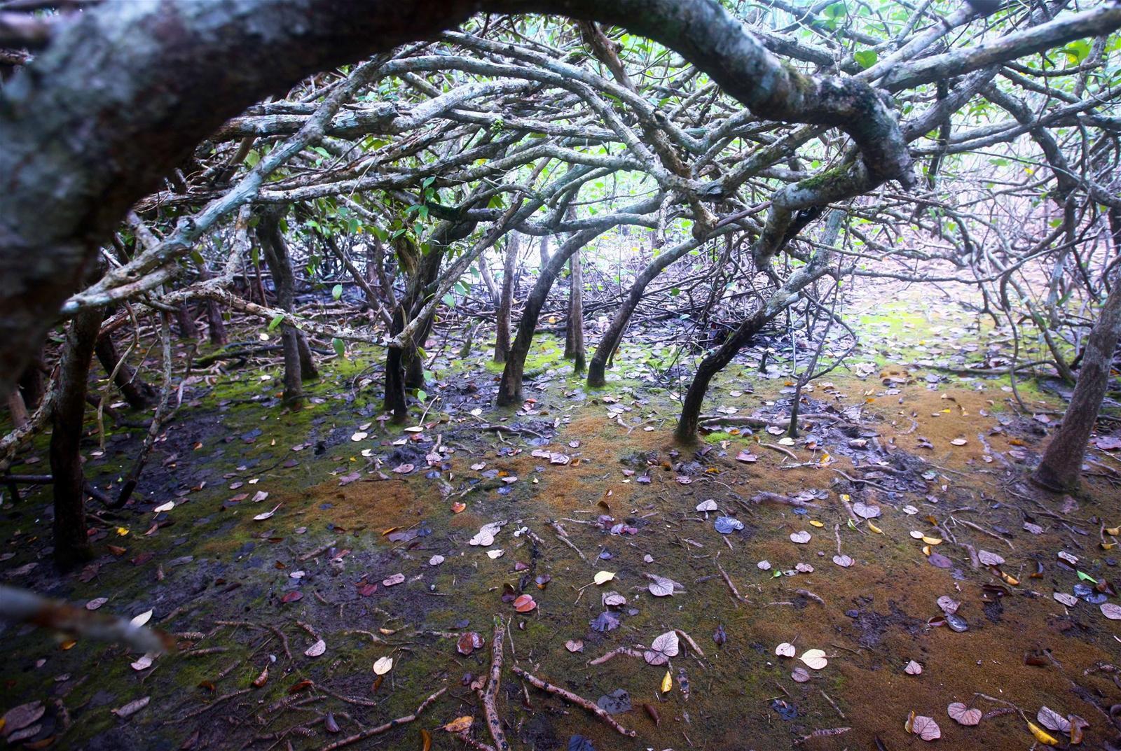 """Kỳ IV: Vườn quốc gia Bái Tử Long - """"Kho báu"""" sinh quyển giữa trùng khơi"""